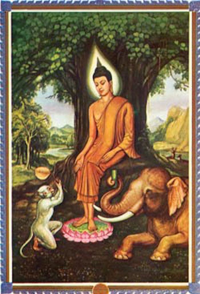 Wednesday Evening Buddha